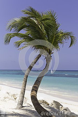 Beautiful beach with palm tree