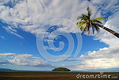Palm tree beach scene