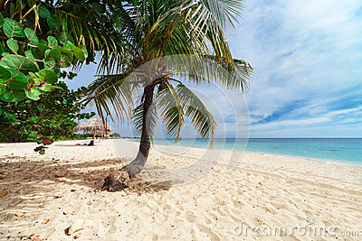 Palm tree on a beach