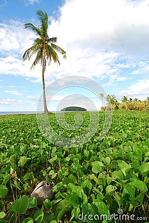 Palm Tree and Beach Vegetation