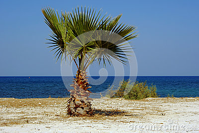 Palm tree on beach, Zakynthos island