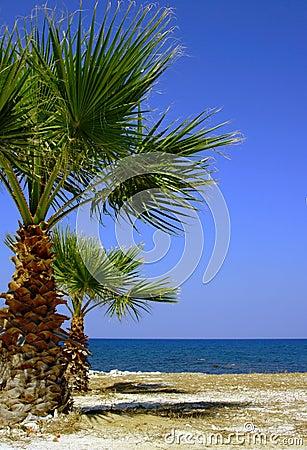 Palm tree on beach, Zakynthos island
