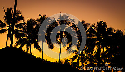 Palm tree at beautiful sunset