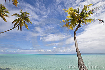 Palm tree and blue lagoon