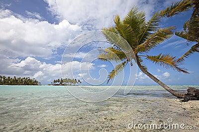 Palm tree on blue lagoon of desert island
