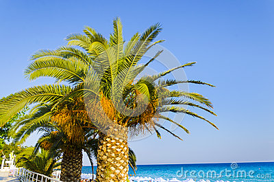 Palm tree and blue ocean