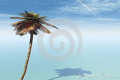 Palm Tree Blue Sea