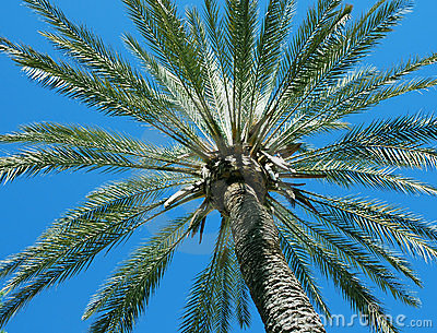 Palm tree and blue sky