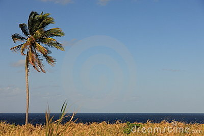 Palm tree, blue sky, free background right