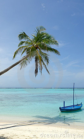 Palm tree and boat at beach