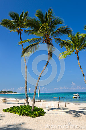Palm tree and boat at a stunning white sand tropical beach