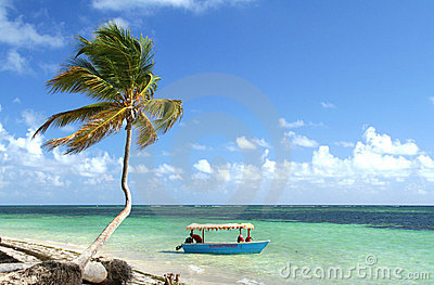 Palm tree and boat on tropical beach