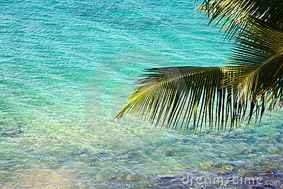 Palm tree branch over clear tropical water