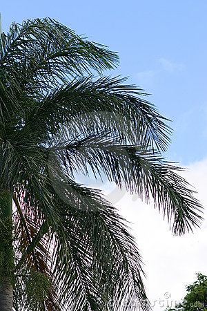 Palm Tree Branches Against a Bright Sky