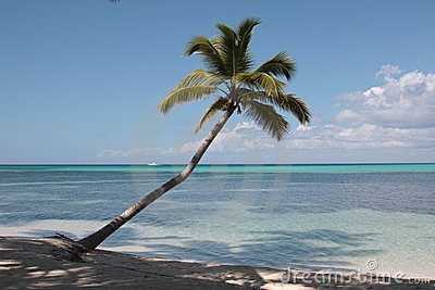Palm tree on the Caribbean beach