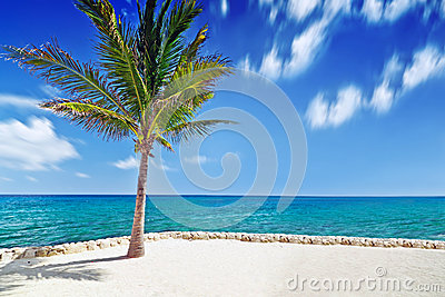 Palm tree at Caribbean Sea