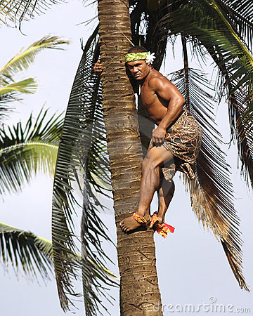 Free Palm Tree Climber Stock Images - 9480614