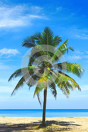 Free Palm Tree Close Up View. Picturesque View Of Andaman Sea In Phuket, Thailand. Seascape. Tropical Beach At The Exotic Island. Stock Photo - 112676460