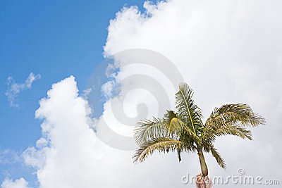 Palm Tree & Cloudscape