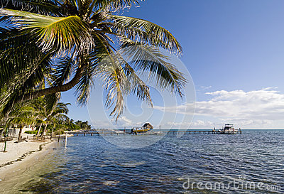 Palm tree in Caye Caulker, Belize