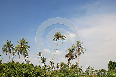 Palm tree environment against blue sky