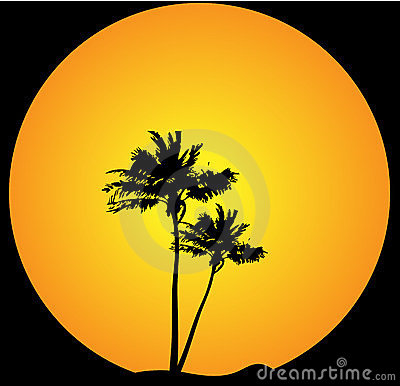Palm tree evening background