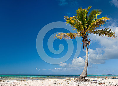 Palm tree on exotic beach