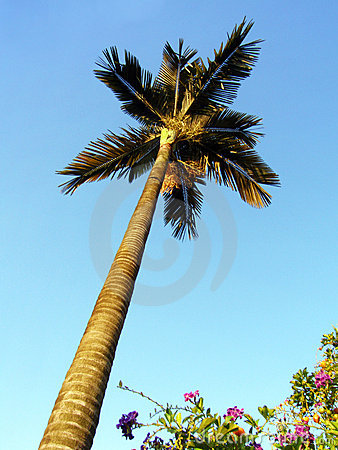 Palm tree & flowering shrubs