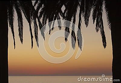 Palm Tree Frame