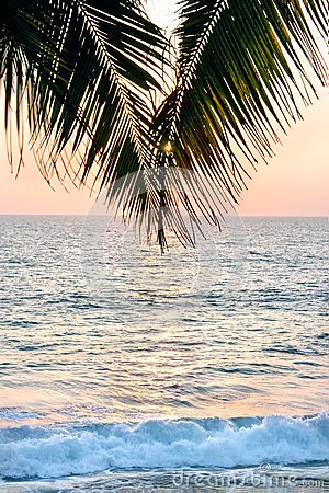 A palm tree in front of the sunset