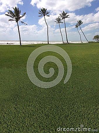 Palm tree golf course the beach