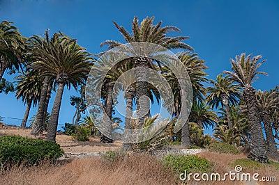 Palm Tree Hill