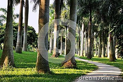Palm tree in horizontally