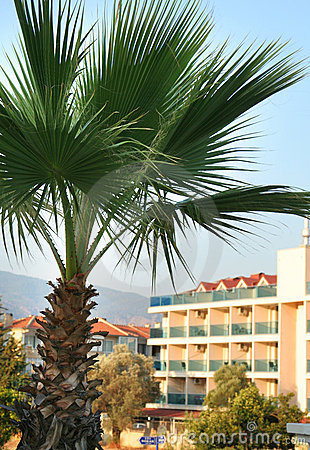 Palm tree and hotels