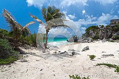 Palm tree on the idyllic beach