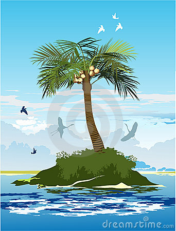 Palm tree on the island