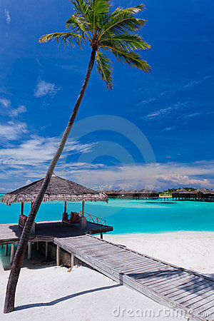 Palm tree and a jetty on a tropical lagoon
