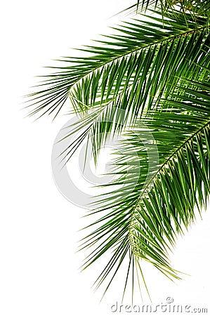 Free Palm Tree Leaf Stock Photography - 11042802