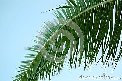 Palm tree leaf and blue sky