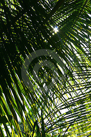 Palm tree leaf close-up