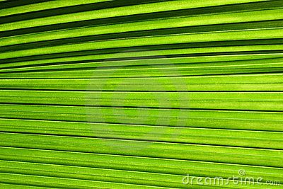 Palm tree leaf close up
