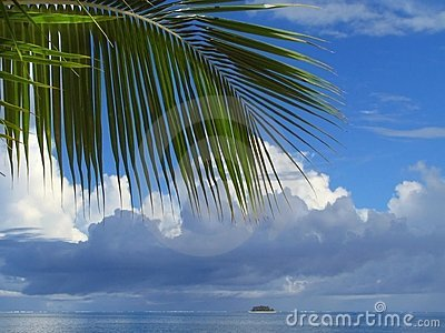Palm tree leaf and cloudscape