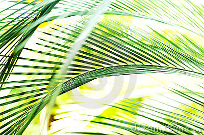 Palm Tree Leaf Motion Blur