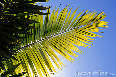 Palm Tree Leaver