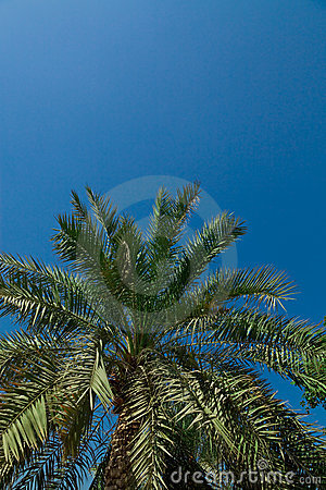 Palm-tree leaves