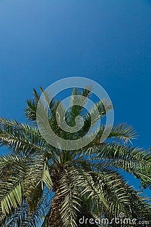 Palm-tree leaves