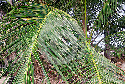 Palm tree leaves on the beach