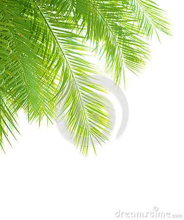 Free Palm Tree Leaves Border Stock Images - 32541024