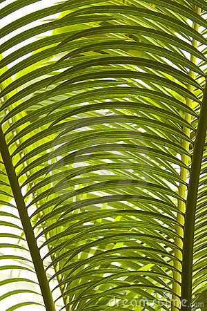 Palm tree leaves detail