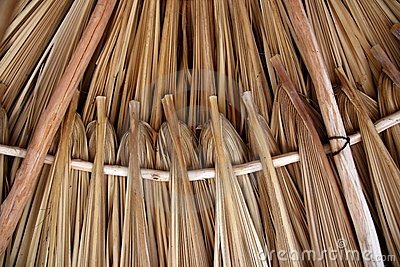 Palm tree leaves in sunroof palapa hut roofing